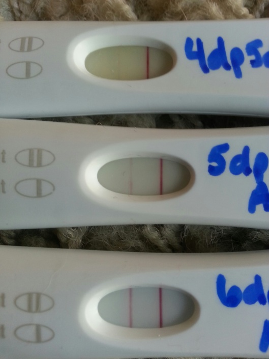 4dp5dt, 5dp5dt, 6dp6dt with FRER. The 4 day one has faded some.